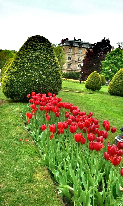 Boston Public Garden, tulips, red tulips, gardening, Boston, Massachusetts, USA