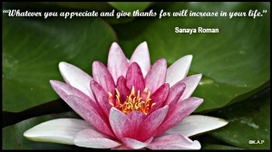pink, pink water lilly, water lilly, quote, gratitude, sanaya roman, truth, flower, pond, serenity