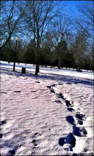 snow, winter, footsteps, path