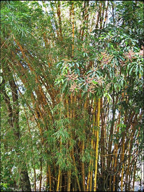 Bamboo, trees, El Salvador, Parque Saburo Hirao