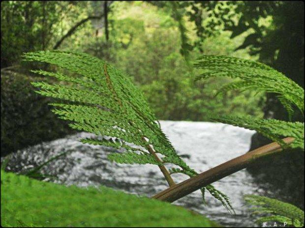 tree, la paz waterfalls, Alajuela, Costa Rica