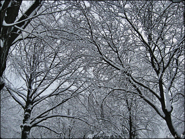 snow, trees, winter, toronto, ontario, canada