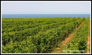 Niagara-On-The-Lake, Vineyards, wine, wineries