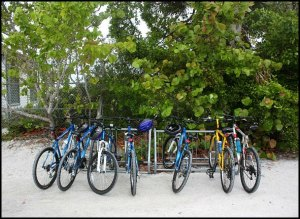 Acme Bicycles, bikes, bike rack