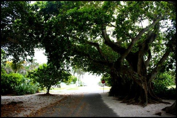 Banyan Street, Boca Grande Bike Path, nature, outdoors, Boca Grande, Gasparilla Island, Charlotte Harbor, SW Florida, FL