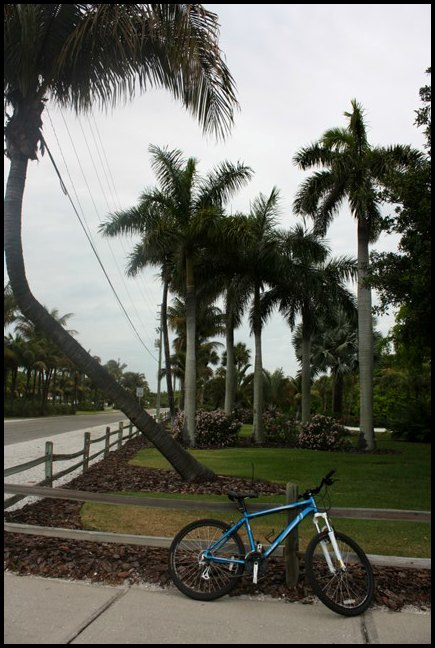 Palm tree, Boca Grande Bike Path, nature, outdoors, Boca Grande, Gasparilla Island, Charlotte Harbor, SW Florida, FL