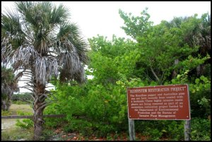 ecosystem, trees, nature, outdoors, Boca Grande Bike Path, nature, outdoors, Boca Grande, Gasparilla Island, Charlotte Harbor, SW Florida, FL