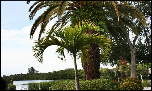 Farlow's on the water, restaurant, Englewood, SWFL, Southwest Florida, Florida, tropical setting, view, waterfront