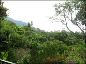 Café del Volcan, jardin, garden, vegetation, El Boqueron National Park, Parque Nacional El Boqueron, San Salvador, El Salvador, park, parque, bosque, forest, hiking, caminata, Centro America, Central America, Travel, Viaje