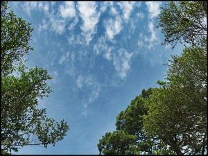 sky, cielo, forest, bosque, El Boqueron National Park, Parque Nacional El Boqueron, San Salvador, El Salvador, park, parque, crater, bosque, forest, hiking, caminata, Centro America, Central America, Travel, Viaje