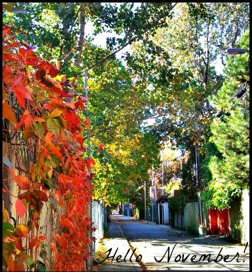 Outdoors, November, Greeting, MTL, Plateau Mont-Royal