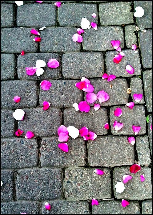 petals on sidewalk, flower petals, Ruoholahti, Ruoholahti Canal, Helsinki, Finland,  travel