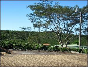 coffee drying, sundried coffee, Doka Estate, Alajuela, Costa Rica, Centro America, coffee plantation