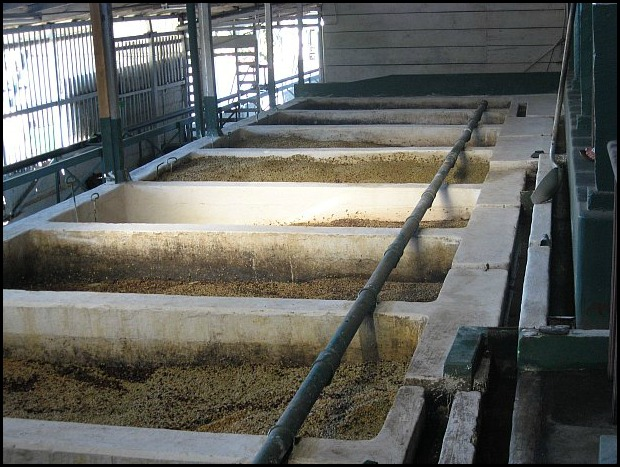 coffee processing plant, Doka Estate, Alajuela, Costa Rica, Centro America, coffee plantation