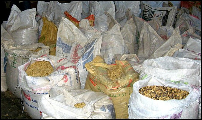 coffee sacks, coffee beans, dried coffee beans, coffee, Doka Estate, Alajuela, Costa Rica, Centro America, coffee plantation