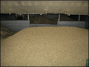 dried coffee, coffee in storage, Doka Estate, Alajuela, Costa Rica, Centro America, coffee plantation