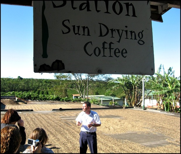 Sundrying coffee, Doka Estate, Alajuela, Costa Rica, Centro America, coffee plantation