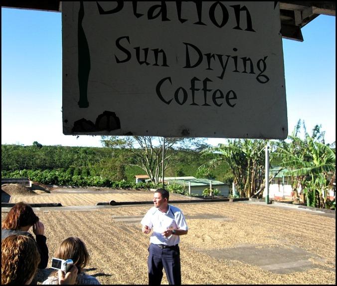 Sundrying coffee, Doka Estate, Alajuela, Costa Rica, Centro America, coffee plantation