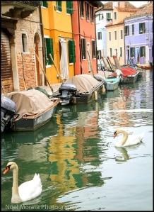 swans, Burano, Italy, italia, nature, outdoors, view, travel, photography, Noel Morata, Noel Morata Photography