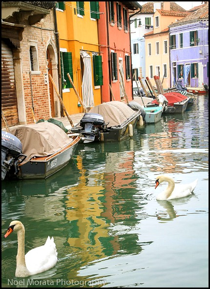 swans, Burano, Italy, italia, nature, outdoors, view, travel, photography, Noel Morata, Noel Morata Photography