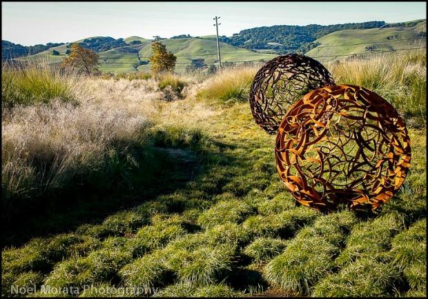 Cornerstone Gardens, Sonoma, California, travel, photography, Noel Morata, Noel Morata Photography