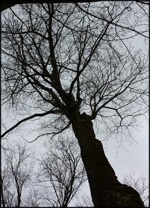 Maple tree, érablier, Cabane à sucre, Constantin Grégoire, sugar shack, St-Esprit, Québec