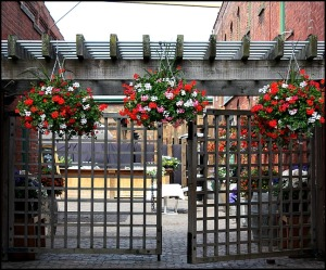 Gate, flowers, Distillery District, Toronto, Ontario, Canada, travel, photography, travellersoul76