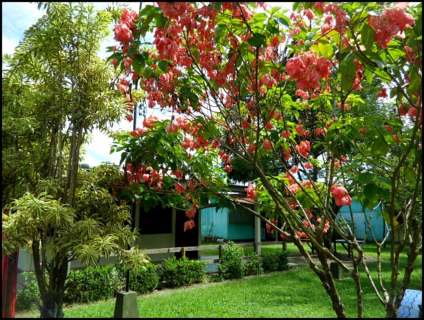 Garden, Anita Primary School, Costa Rica, travel, photography, TS76, Pack For a Purpose, social good