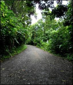 Parque Nacional Manuel Antonio, Costa Rica, Park, nature, travel, photography, TS76