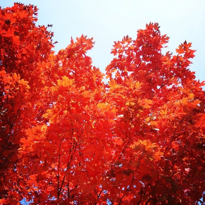 October, fall foliage, Montreal, Quebec, Canada, travel, photography, nature, outdoors