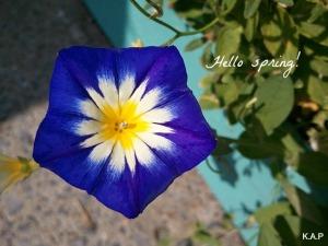 blue flower, flower, flower power, nature, outdoor, TS76, photography