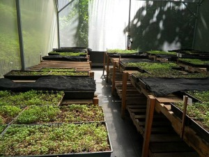 Microgreens, organic, green house, invernero, Parador Resort and Spa, food, vegetables, TS76