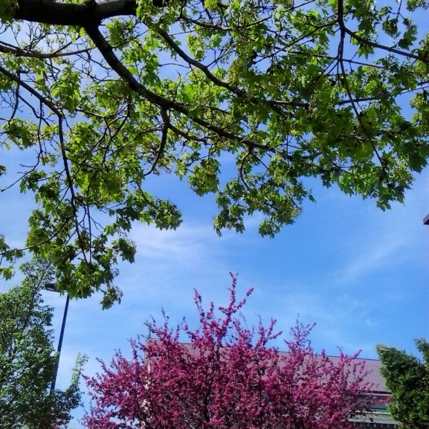 Instagram, TS76, photography, spring, nature, colors, trees, colorful trees
