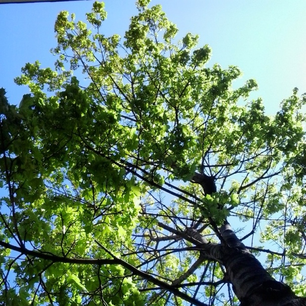 Instagram, TS76, photography, tree, green leaves, sky, nature, outdoors