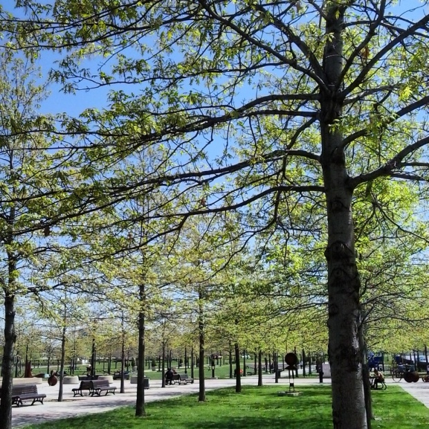 Instagram, TS76, photography, outdoors, nature, park, spring, Montreal