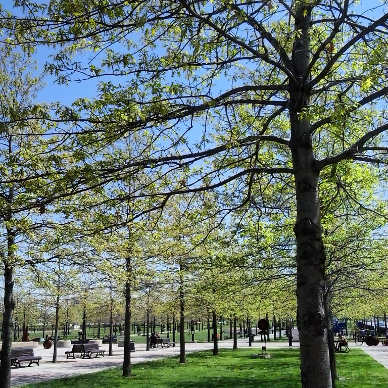 Instagram, TS76, photography, Montreal, park, outdoors, nature, spring