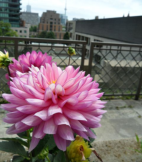 Toronto, Ontario, Windsor Arms, hotel, spa, afternoon tea, terrace, flowers, photography, TS76