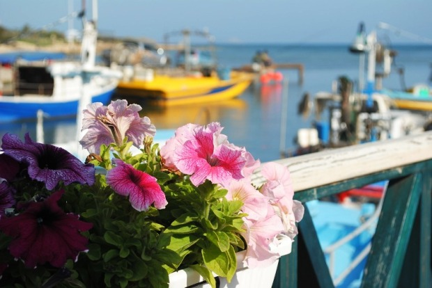 Boats, moored boats, Cyprus, flowers, travel, photography