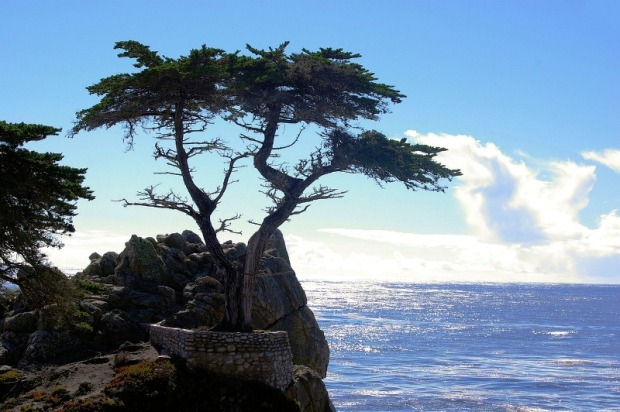 Talahi tree, tree, rock, sea, Cyprus, travel, photography