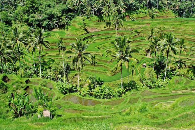 Aerial view, Rice fields, Bali, Indonesia, travel, photography