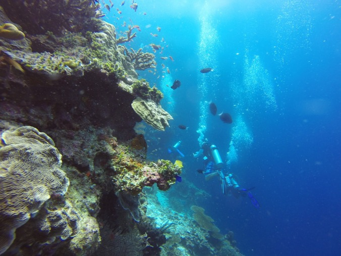 Kalimantan, diving, dive, Kalimantan, Indonesia, water sports, travel, photography