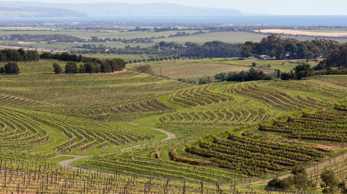 Vineyards in the Barossa Valley, South Australia.