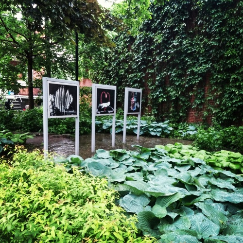 Outdoor photography exhibition at a park