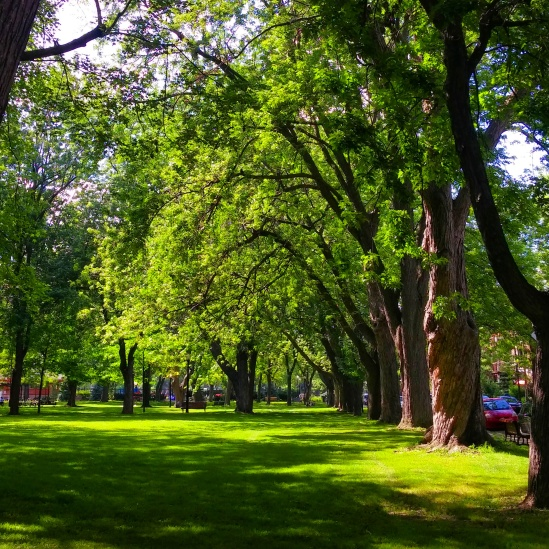 Green spaces, fresh air. Gorgeous park in Montreal, Quebec, Canada.